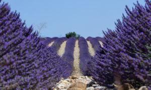 TOUR - Calanques e lavanda, attraverso la Provenza @ Provenza - Francia
